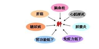 重大疾病的根源在肝脏